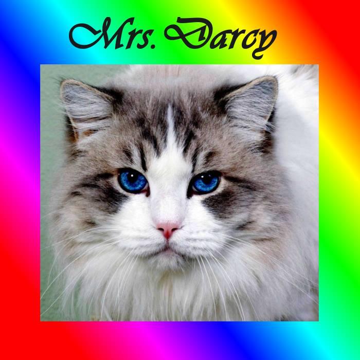 Mrs Darcy
